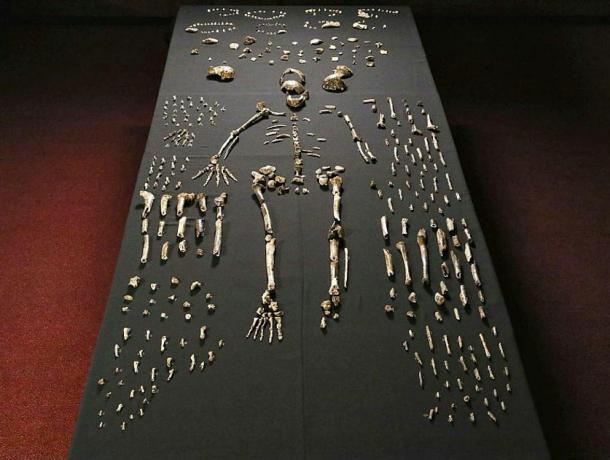 Some of the skeletal remains of Homo Naledi recovered in a South African cave.