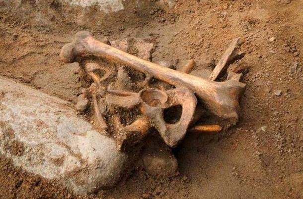 The skeleton was discovered under the city's oldest primary school.