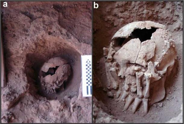 Photographs of skull 26 at the burial site, Lapa do Santo, Brazil.