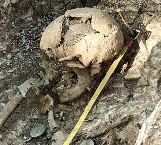 A skull excavated at Barrow Clump in Salisbury Plain. (Crown Copyright 2018)