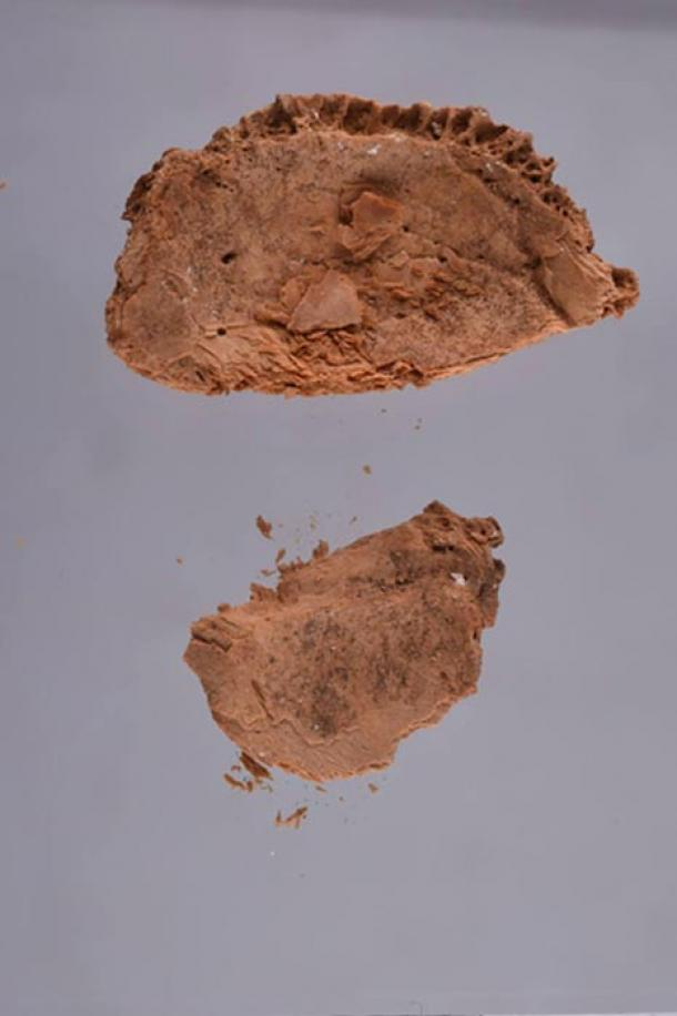 Pieces of the skull found in the sarcophagus in KV55