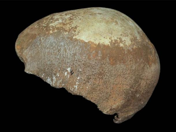 Newly-discovered skull from Manot Cave.