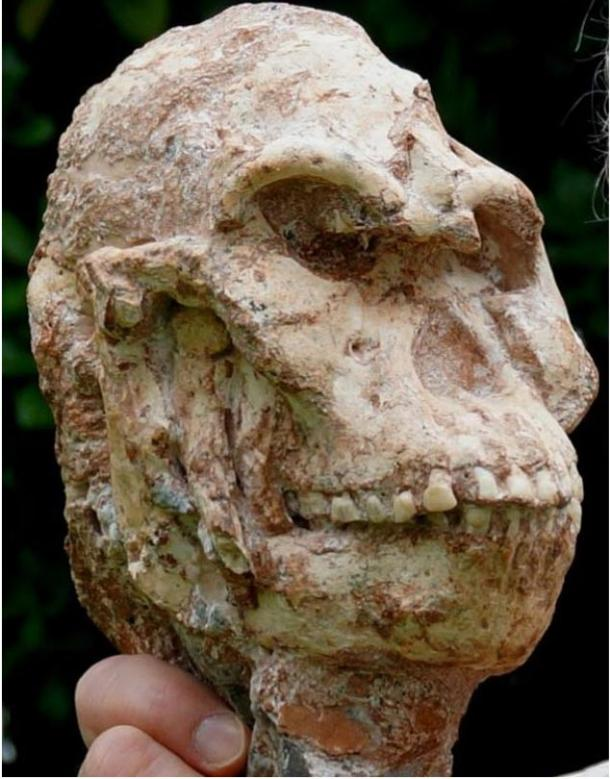 The skull of Little Foot, a proto-human found in the 1990s