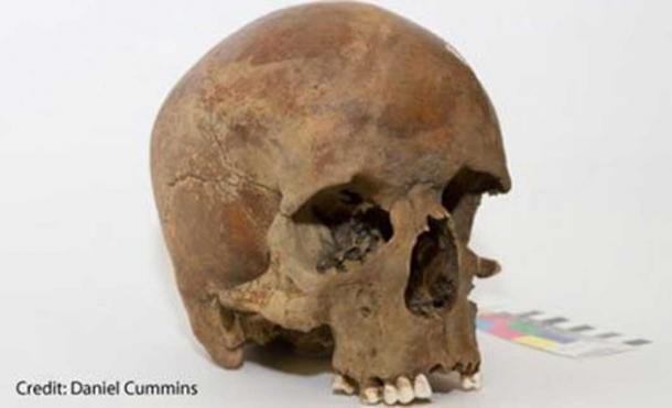 The skull of a European male dating to 1600s found in New South Wales. Credit: Daniel Cummins