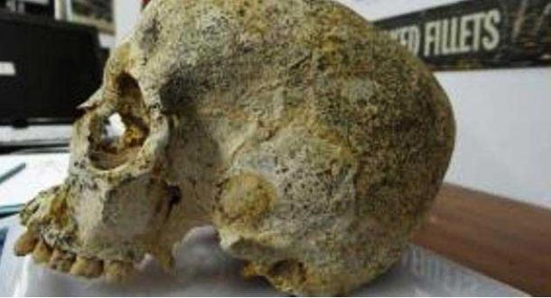 The skull of the Bronze Age woman found in the Achavanich Beaker burial.