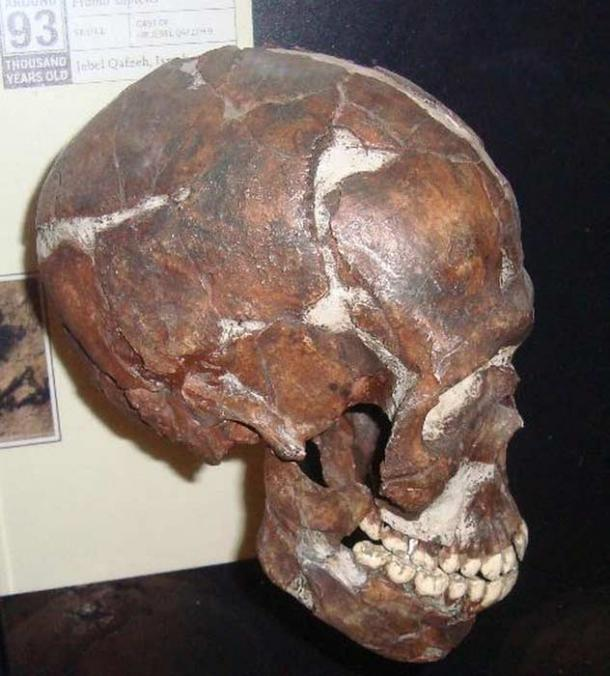 The skull of the disabled child found in the Qafzeh cave system in Galilee, Israel.