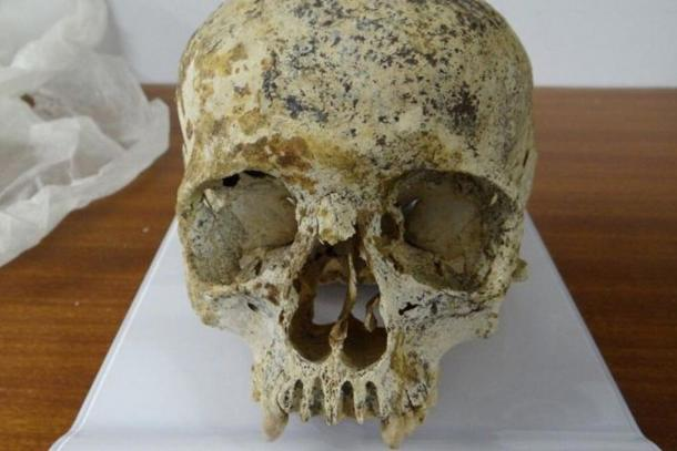 Front view of the skull of the woman dubbed 'Ava'.
