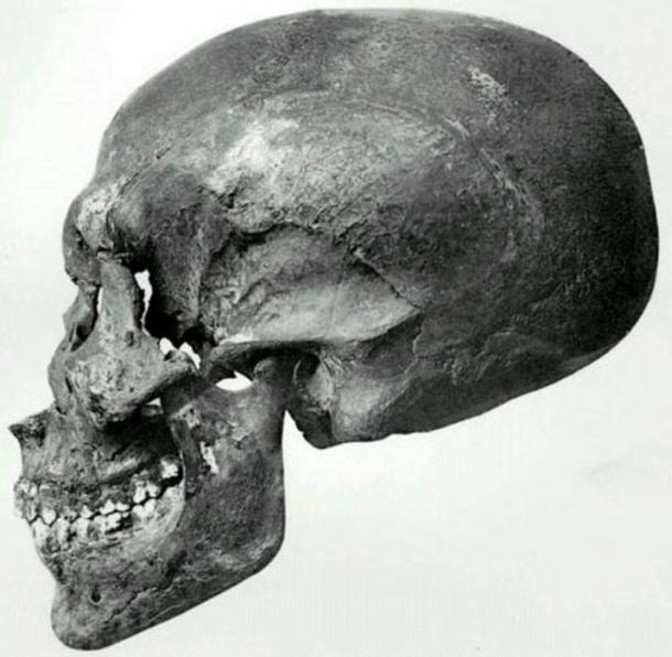 Profile view of a skull recovered from KV55.