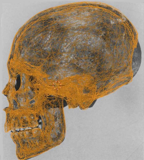 Mummy KV55's skull with data points used in the facial reconstruction. (FAPAB Research Center)