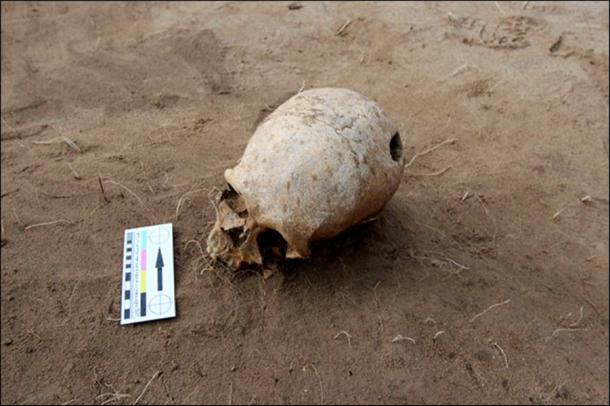 A male skull was found last year in the Nefteprovod II burial ground at Anzhevsky archaeological site, southeast of Kansk in Krasnoyarsk region.