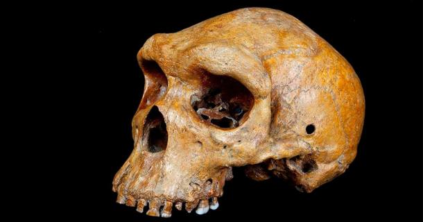 The Broken Hill skull from Zambia is younger than scientists previously suspected. (Natural History Museum in London)