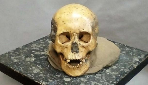 One of the skulls from Devil's Gate Cave, Russia.
