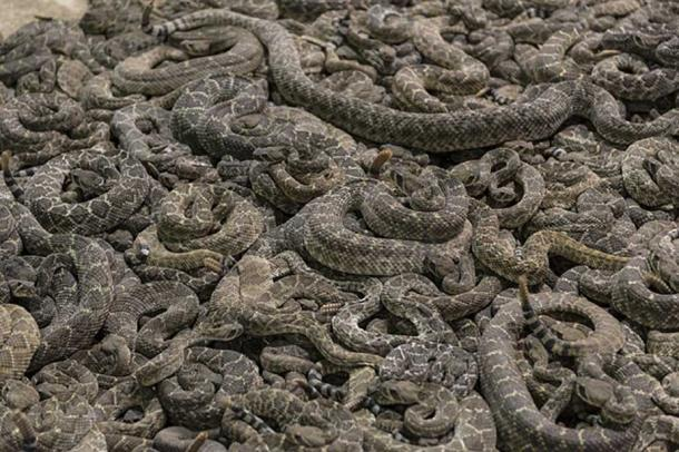 One of the punishments handed out by Zhou Xin was to be thrown in a snake pit (public domain)