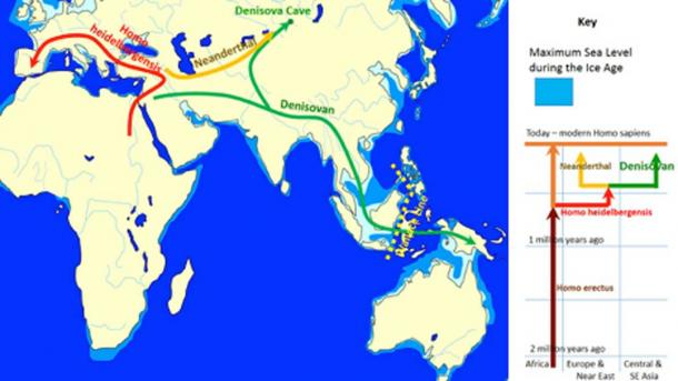 The evolution and geographic spread of Denisovans as compared with other groups