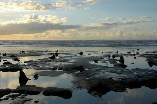 The submerged prehistoric forest at Borth Beach, Wales.