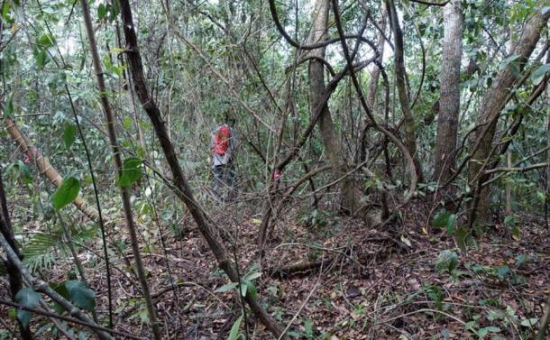The thick canopy and choking vines, while protective of the site, had to be dealt with before limited excavations could take place.