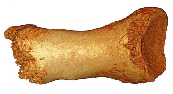 A toe bone from a male Neanderthal dating back at least 50,000 years.