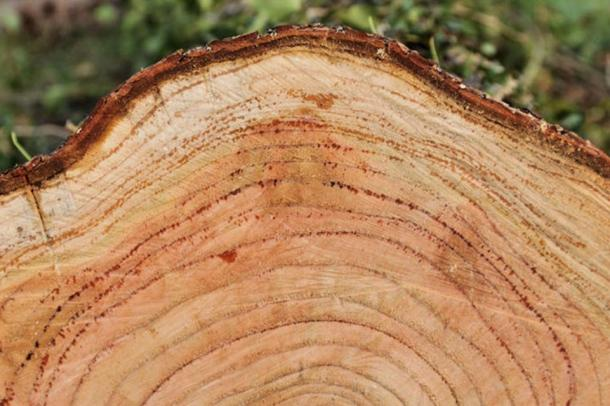 Evidence from tree rings suggests that wildfires caused New England's Dark Day.