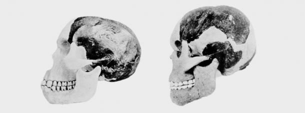 Two scientists involved in the Piltdown Man case attempted to reconstruct Piltdown man's cranium and mandible. (British Natural History Museum photo)