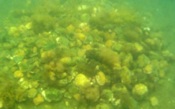 One of the underwater mounds investigated by J. Hutton Pulitzer's team off the coast of Oak Island.