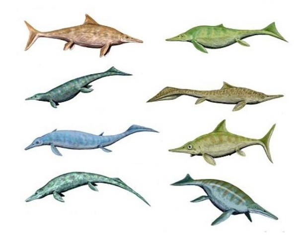 All shapes and sizes: Illustration showing the diversity of various Ichthyosaurs.