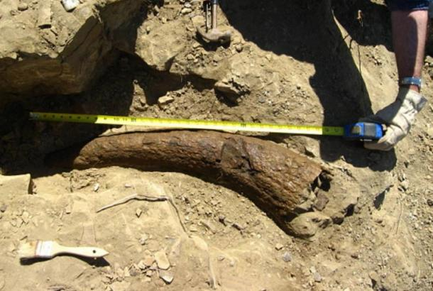 Did Humans Walk the Earth with Dinosaurs? Triceratops Horn Dated to 33,500 Years