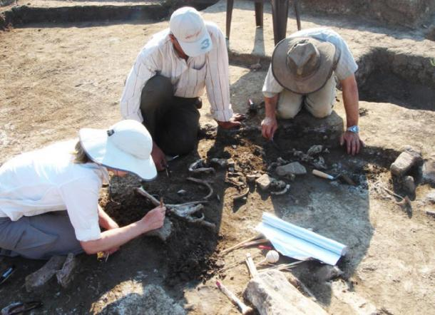 The warrior's remains were unearthed at a site in the Nile Delta and are believed to represent a casualty of an Egyptian revolt around 2,200 years ago, researchers say. (R. Littman and J. Silverstein)