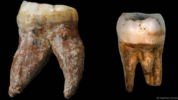 Shape, size, placement and wear on teeth are indicators of species.