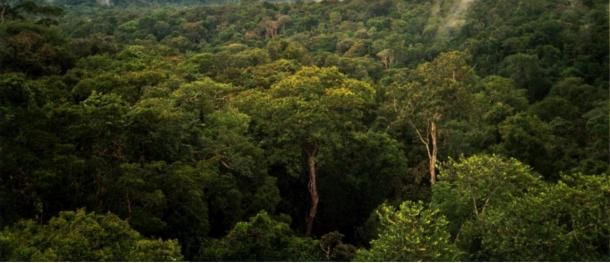 The wild wilderness of the Amazon in Brazil, where Percy Fawcett conducted numerous expeditions
