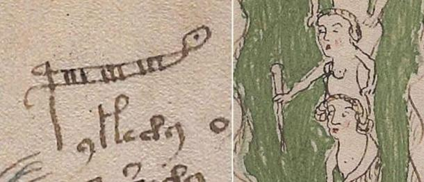 This shows the word 'palina' which is a rod for measuring the depth of water, sometimes called a stadia rod or ruler. The letter 'p' has been extended