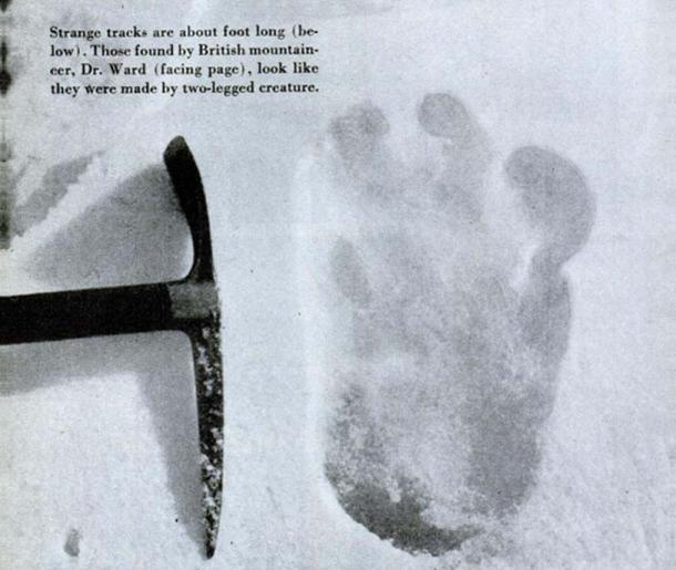 Photograph of an alleged yeti footprint found by Michael Ward. Photograph was taken at Menlung glacier on the Everest expedition by Eric Shipton in 1951.