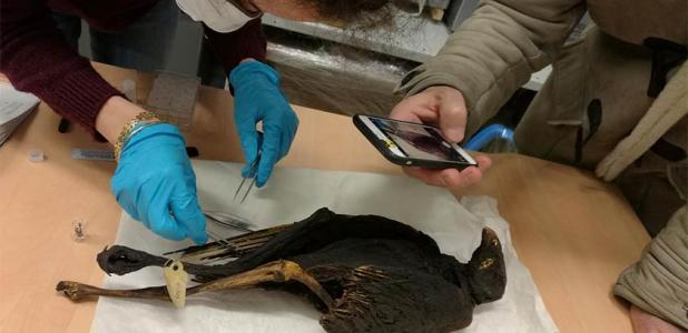 Ancient Egyptians Went Wild for Bird Mummy Offerings