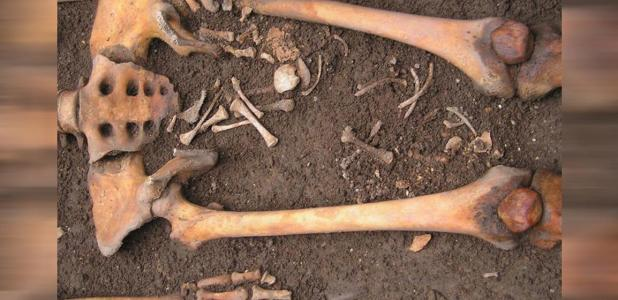 Medieval burial showing the remains of a woman and a fetus in Bologna, Italy.