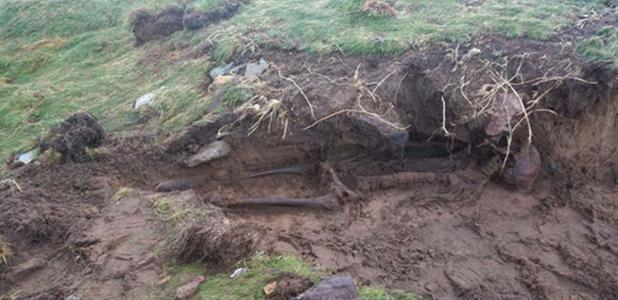 The skeletal remains found after stormy weather in Kilmore Quay, Ireland.