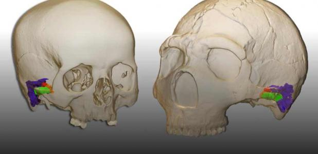 Study Shows Neanderthals Had Capacity To Produce And Understand Speech