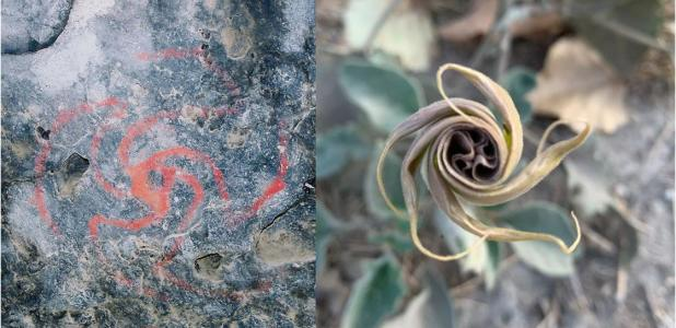 Magic Flowers of U.S. Dream Trippers Found at California's Pinwheel Cave