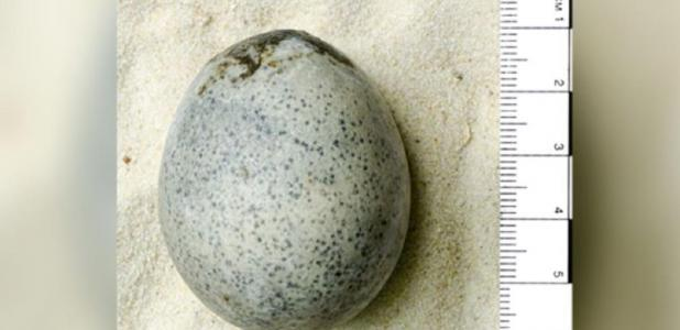 The Roman-era egg was cast into a watery pit, possibly as part of a funeral rite. Source: Oxford Archaeology.
