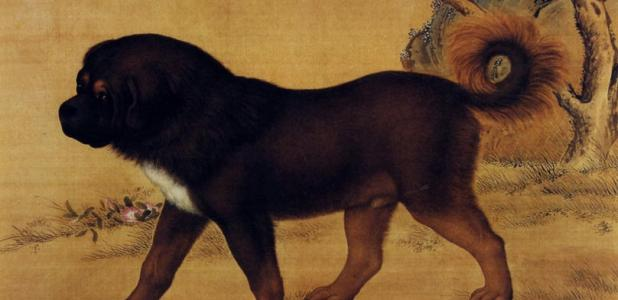 Artwork depicting a Tibetan Mastiff from the Qing Dynasty.