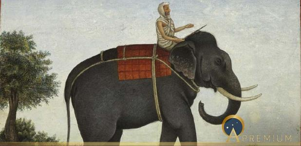 The Mûmakil Elephant Slayers Of The Ancient World