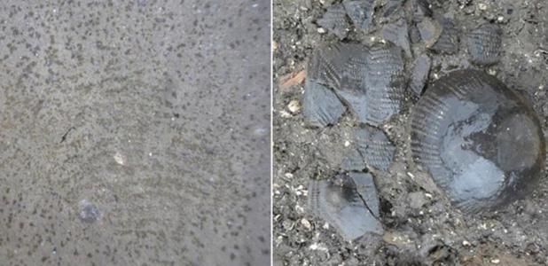 The 5,500-year-old fingerprint (left) and the funnel beaker (right)