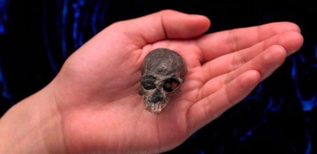 20-million-year-old skull discovered in the Andes Mountains of Chile. Source: AMNH / Facebook .