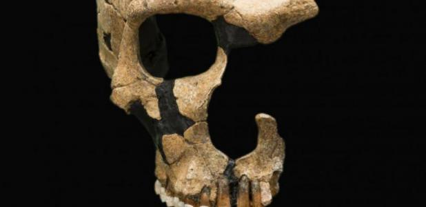 A Neanderthal skull shows head trauma, evidence of ancient violence. Smithsonian National Museum of Natural History