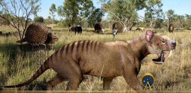 Saber-toothed sparassodont †Thylacosmilus (with †Glyptodon and toxodonts in the background) (Public Domain)