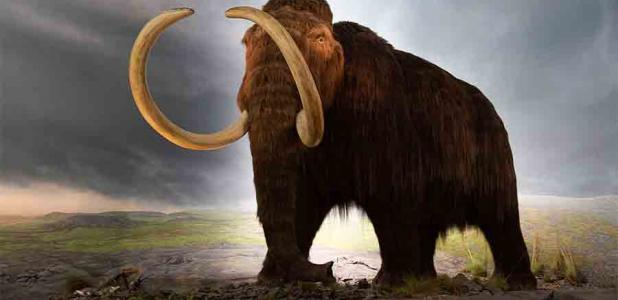 The discovery of a long-forgotten woolly mammoth bone may prove that humans and woolly mammoths coexisted in the northeastern United States.