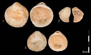 The discovery that a collection of shells were threaded onto 120,000-year-old strings, at a cave in Israel is an important discovery which advances our understanding of human evolution. Source: Bar-Yosef Mayer et al/Plos One/PA Wire
