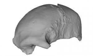 A 3D scan of a 22,000-year-old skull fragment from a modern human found in Kenya.