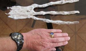 A mummified three-fingered hand with eight inch fingers has been found in a Peruvian tunnel in the desert. While first inspection may lead one to conclude that it is nothing more than an imaginative man-made creation, examination by a physician in Cusco, Peru, revealed that it is composed of skin and bone, with six bones in each finger.