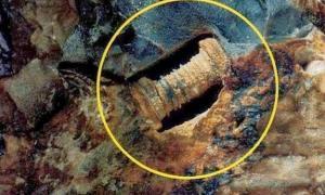 300 million-year-old screw