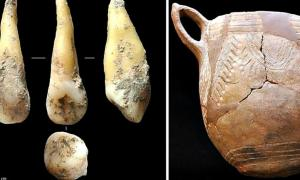 Left:  tooth which has had its genome sequenced, discovered in a Spanish cave. It belonged to a Neolithic farmer from 7400 years ago. Right: Cardium Pottery typical of the culture to which the Neolithic farmer is believed to have belonged.