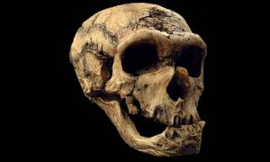50,000-year-old Skull